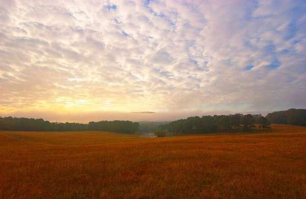 farm near Section Alabama